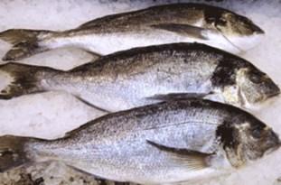 صید ماهیان
