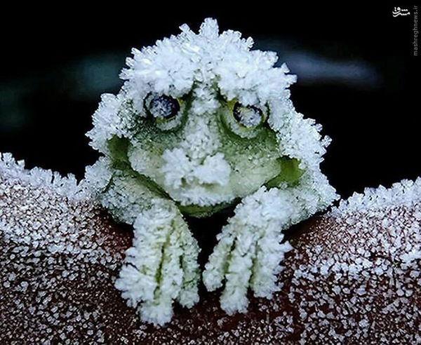 عکس/ جانوری که در زمستان می میرد و در بهار زنده می شود