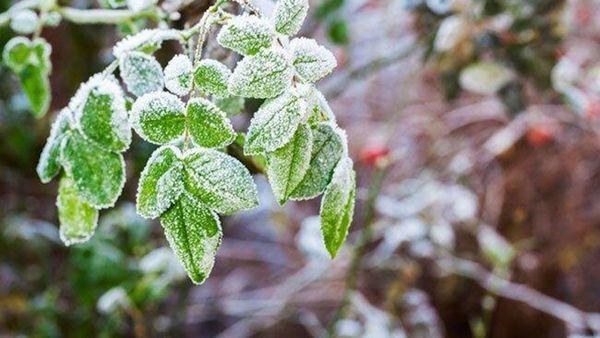موج سرما گلستان را در بر می گیرد/ کشاورزان مراقب باشند