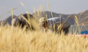 کمک ستاد اجرایی فرمان امام به کشاورزان