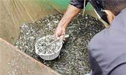 رها سازی حدود ۲۰ میلیون قطعه بچه ماهی در مزارع سد وشمگیر