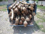 کشف ۱۰۰ تن چوب قاچاق در علی آبادکتول
