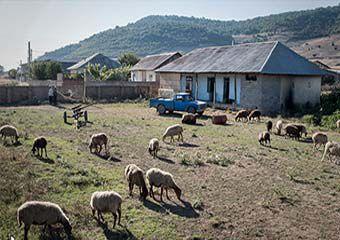 گزارش تصویری/ تبدیل دبستان دولتی حاجیکا به چراگاه گوسفندان
