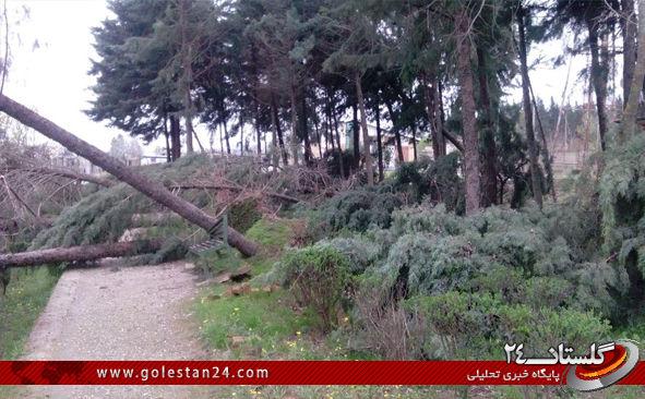 درختان کردکوی7