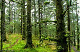 جنگلتراشی و آلایندهها مناطق شمال را تهدید میکند