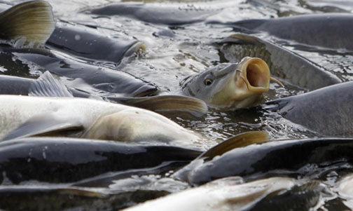 قیمت ماهی ۳۰ درصد کاهش یافت