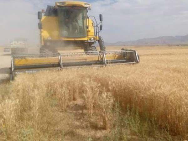 پرداخت بیش از 4100 میلیارد ریال بهای گندم به کشاورزان گلستانی