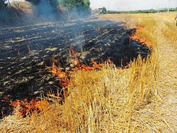 دستگیری کشاورزی در حین آتش زدن زمین کشاورزی