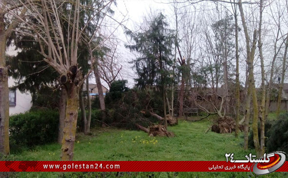 درختان کردکوی3