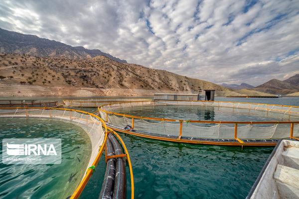 سواحل کم عمق خزر در گلستان ظرفیتی بکر برای پرورش ماهی در قفس
