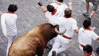 فیلم/ حمله وحشیانه گاو به یک زن!