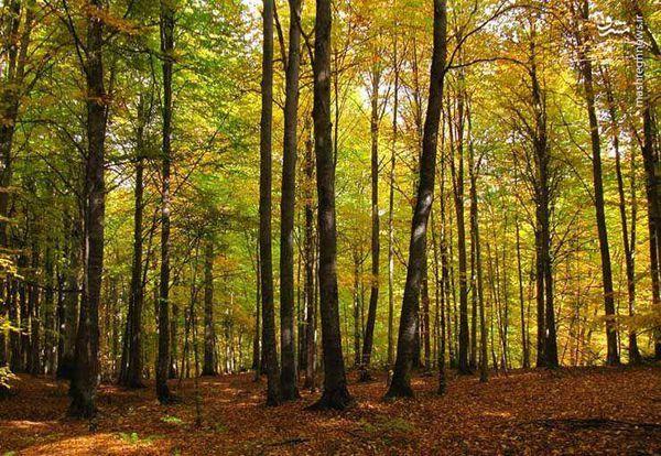 فیلم/نجات جنگل ۴۰ میلیون ساله ناهارخوران با دستور «رئیسی»
