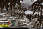 برف در ارتفاعات زیارت گرگان+عکس