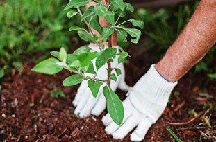 خرید و کاشت 10 هزار اصله درخت در شهر مینودشت