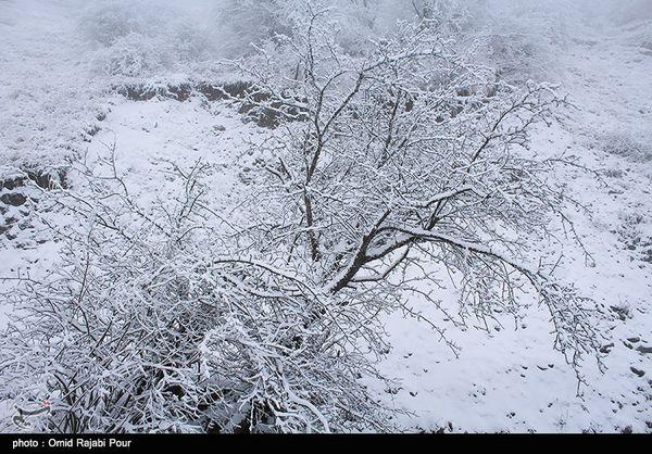 سرمای هوا تا جمعه در استان گستان ادامه دارد