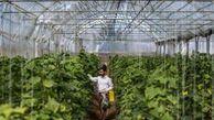 گلایه بهرهبرداران گلستانی از وضعیت پروانه اشتغال در فعالیتهای کشاورزی