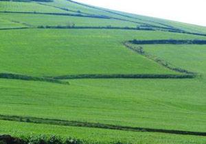 پیش بینی تولید بیش از ۱۵۰ هزار تن جو در گلستان