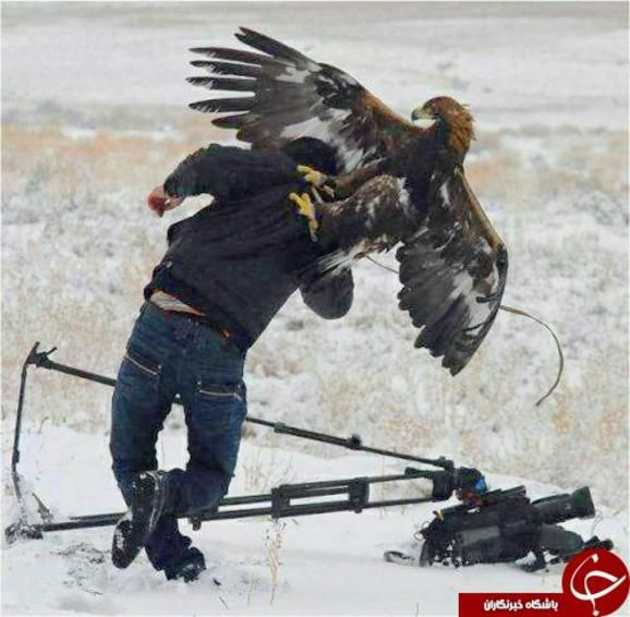 لحظه حمله عقاب به تصویربردار+تصاویر