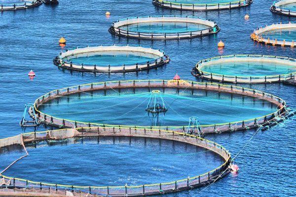 اراضی لم یزرع شمال گمیشان محل مناسبی برای تولید ماهی در قفس است