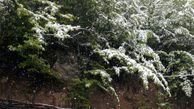 هم اکنون، بارش برف بهاری در روستای زیارت گرگان