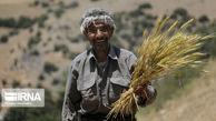 حمایت دولت از افزایش قیمت خرید تضمینی گندم موجب استمرار تولید میشود