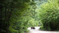 اجرای طرحی حفاظت از ذخیره گاه زیست کره پارک ملی گلستان
