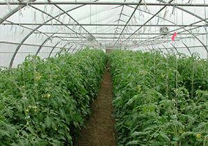 ارائه تسهیلات به کشاورزان گلخانه کار گنبدی