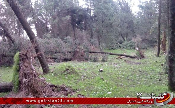 درختان کردکوی9