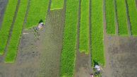 کشاورزان نمونه پیشگامان رونق تولید در گلستان معرفی شدند