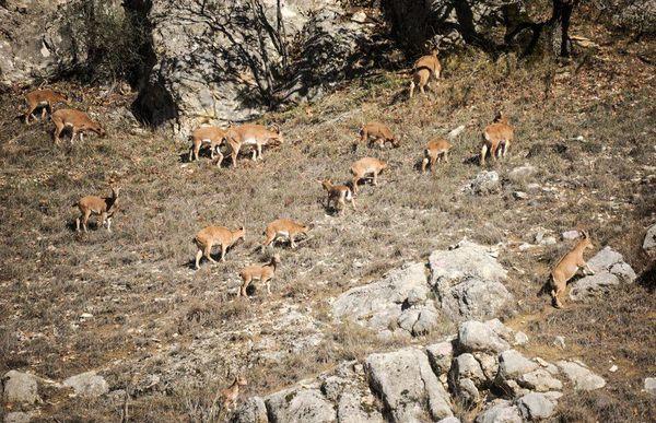 پارک ملی گلستان نیازمند راهاندازی مرکز یا دفتر تحقیقاتی است