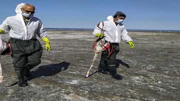 نگرانی خلیج گرگان از احتمال تکرار فاجعه مرگ پرندگان مهاجر