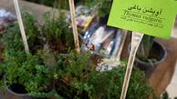 برپایی جشنواره گیاهان دارویی از امروز در گرگان