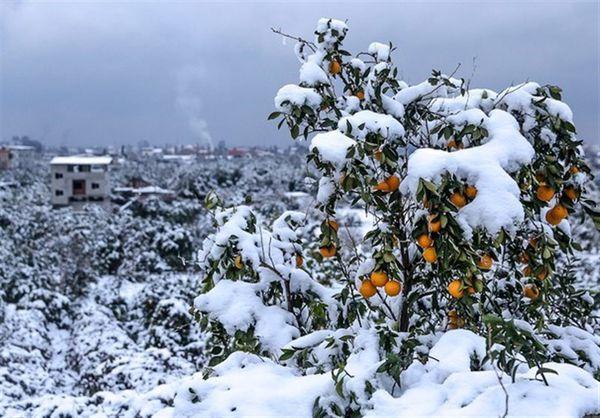 هشدارهای هواشناسی به کشاورزان تا ۲۷ بهمن