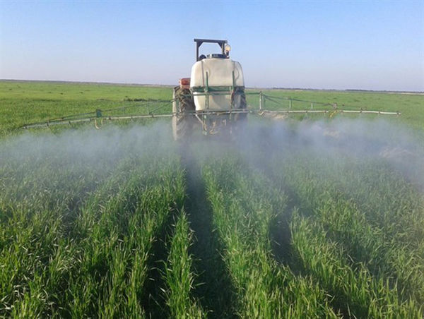 سمپاشی بیش از 200 هزار هکتار از گندمزارهای گلستان
