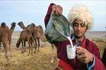خواص معجزهآسای شیر شتر