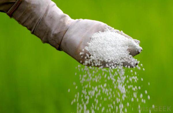 کمبود کود در قطب تولیدات کشاورزی کشور؛ سبقت گرانی از درآمد کشاورزان