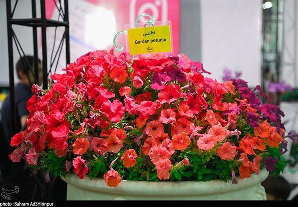 مهمترین ویژگی نمایشگاه گل و گیاه اهواز نقش بخش خصوصی است