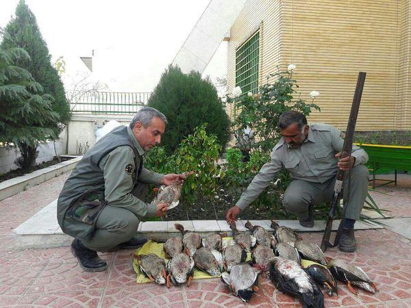 دستگیری شکارچی متخلف با 17 قطعه مرغابی سرسبز
