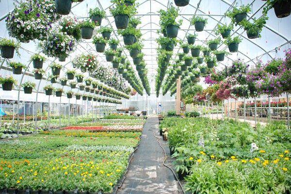 تولید ۲۱ میلیون عدد گل و گیاه زینتی طی سال گذشته در گلستان