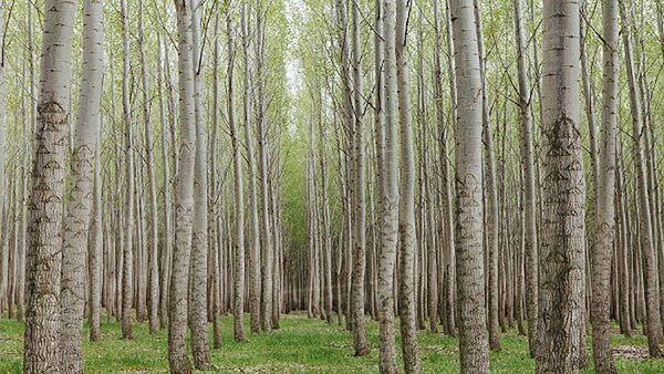 آیا جایگزینی برای قطع نکردن بی رویه جنگلهای هیرکانی وجود دارد؟
