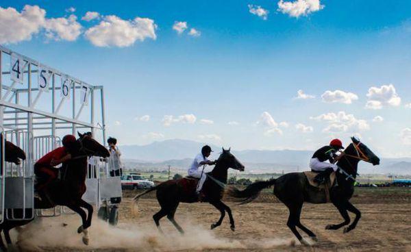تصاویر / کورس پائیزه اسب ترکمن