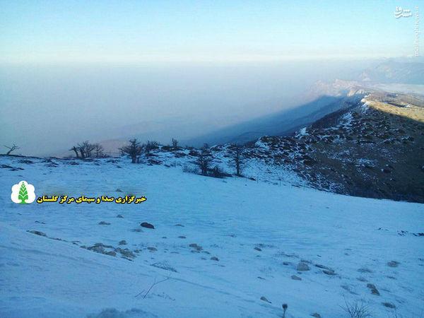 عکس/ صبح زیبای برفی در ارتفاعات درازنو