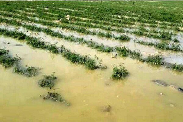 پرداخت ۱۳۵ میلیارد تومان کمک بلاعوض برای جبران خسارت سیل گلستان