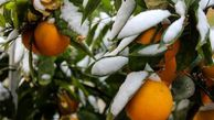 هشدارهای مهم هواشناسی به کشاورزان/ افزایش آلودگی هوا در ۸ شهر کشور
