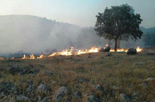 خاموشی آتش جنگل کردکوی به امکانات سختافزاری بیشتر احتیاج دارد