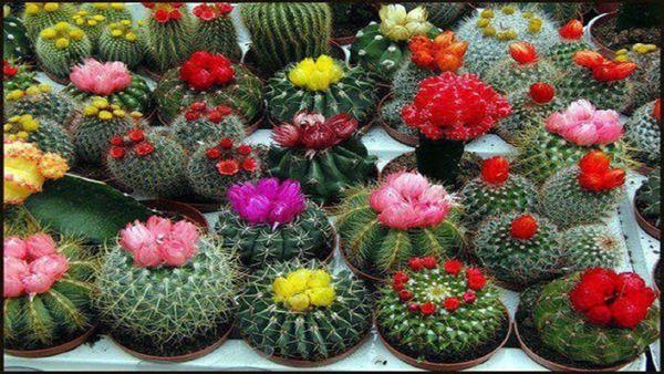 تولید ۲۵ میلیون گل و گیاه زینتی در گلستان