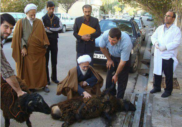 عکس/ آیتالله جوادی در کنار ذبح قربانی شده
