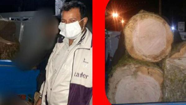 دستگیری عامل قطع درختان جنگلی در علی آبادکتول