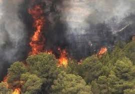 فیلم/ آتشسوزی جنگلها در «دهبکری» کرمان