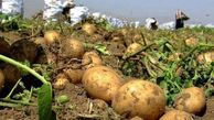 پیش بینی تولید بیش از ۱۵۰ هزار تن سیب زمینی در گلستان